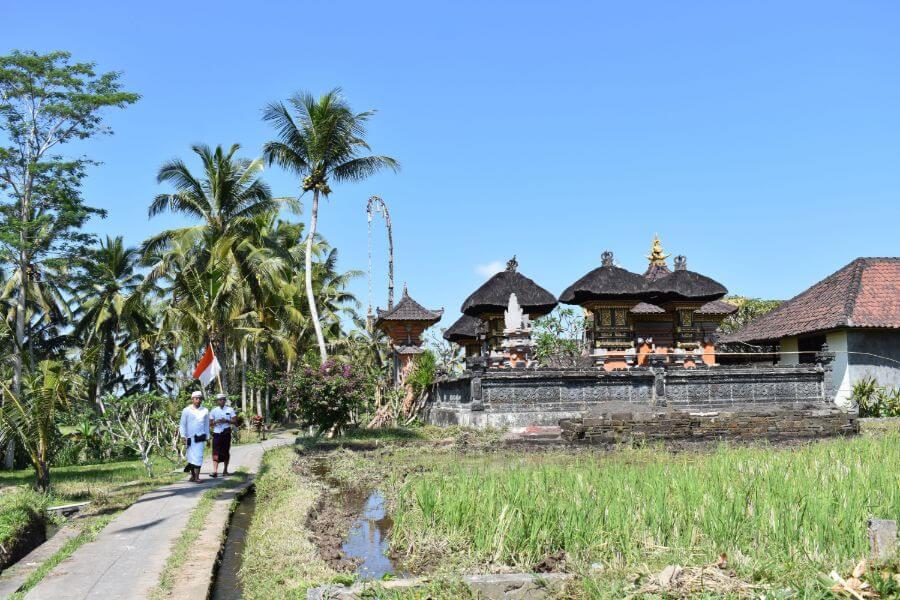 Indonesie Bali Trekking Kenderan rijstvelden 12