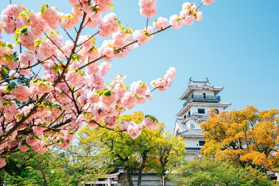 Japan Shikoku Imabari Castle at spring in Ehime