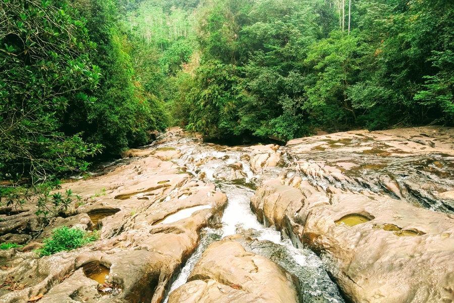 Sri Lanka Kitulgala Makandawa regenwoud