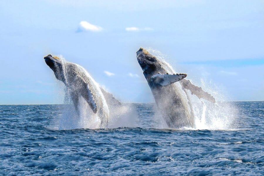 Gerelateerde tour Dolfijnen en walvissen spotten