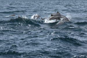 Blog artikel1 'Dolfijnen, blauwe vinvissen en zeeschildpadden rondom Trincomalee'