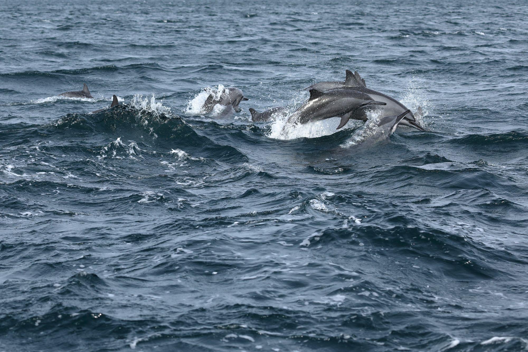 Sri Lanka Trincomalee doflijnen in de Indische Oceaan