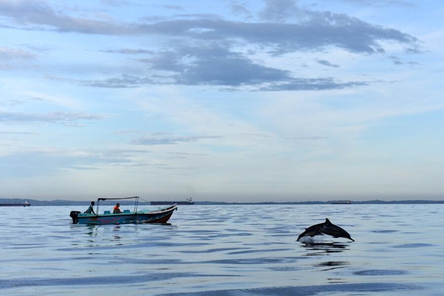 Sri Lanka Trincomalee dolfijn