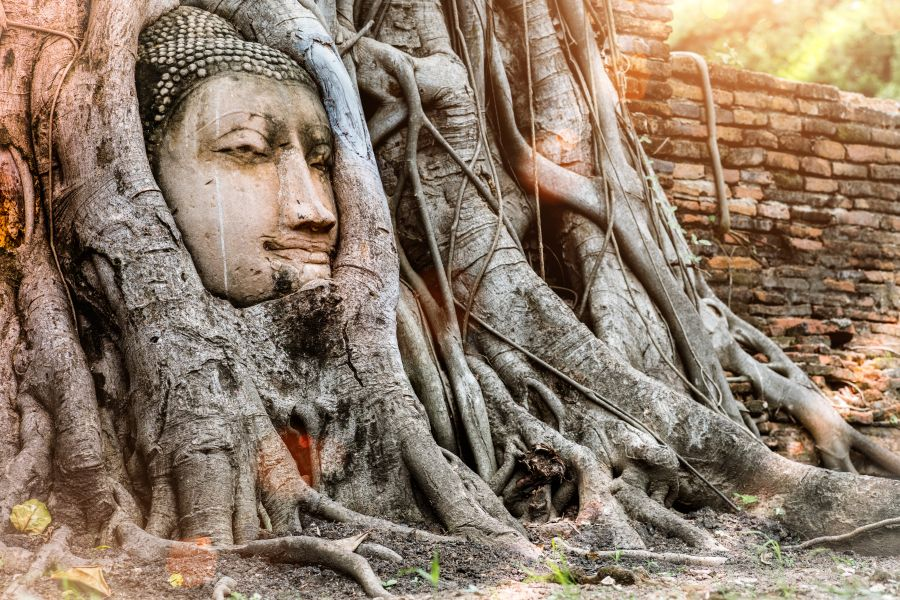 Thailand Ayutthaya hoofd van Boeddha