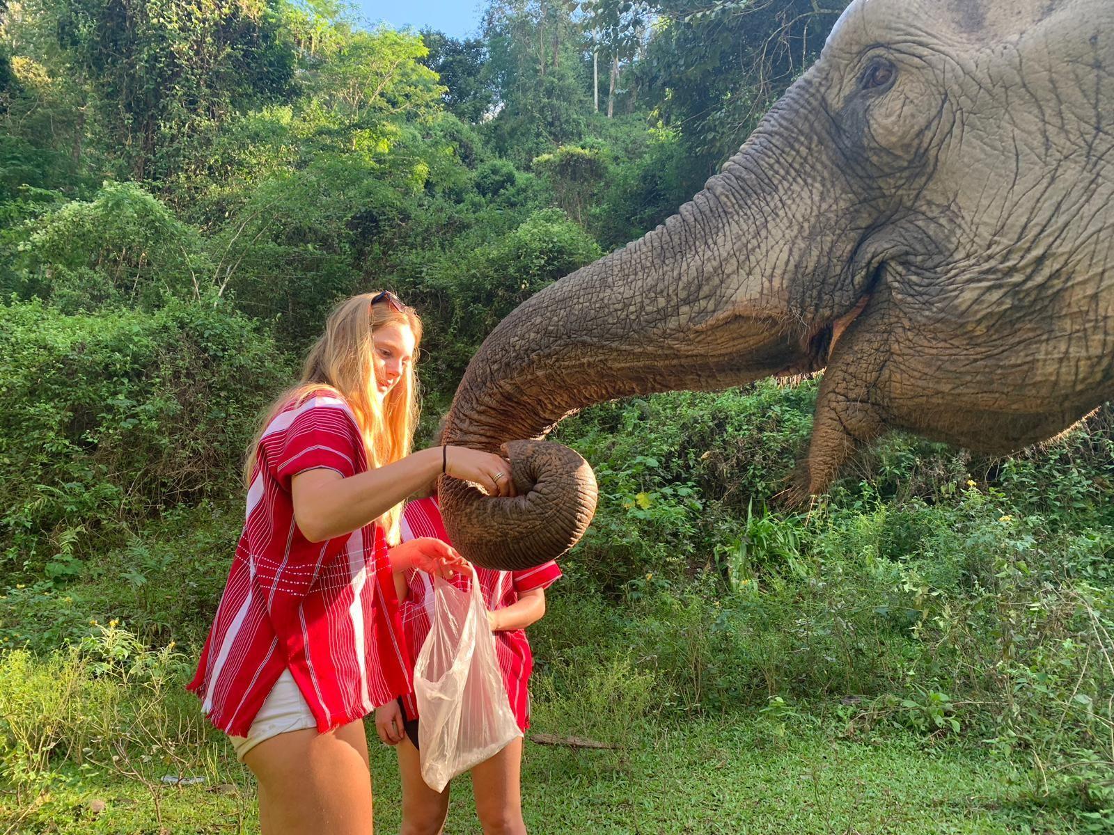 Blog artikel 'Ethisch olifantentoerisme in Thailand'