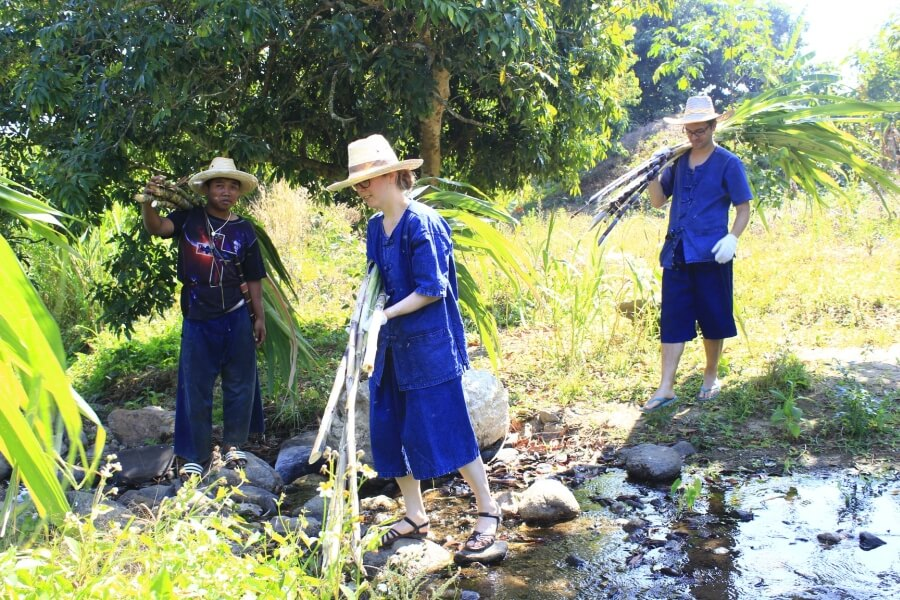 Thailand Chiang Mai Olifanten trainer voor 1 dag 03