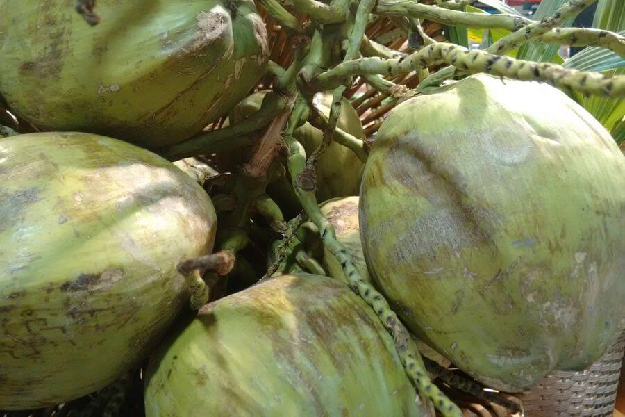 Thailand Eten Fruit Jonge groene kokosnoot