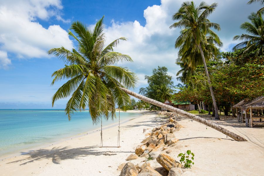 Thailand Koh Phangan strand met palmboom
