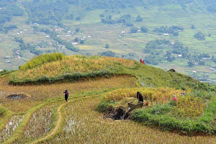 Vietnam Sapa rijstterrassen 05