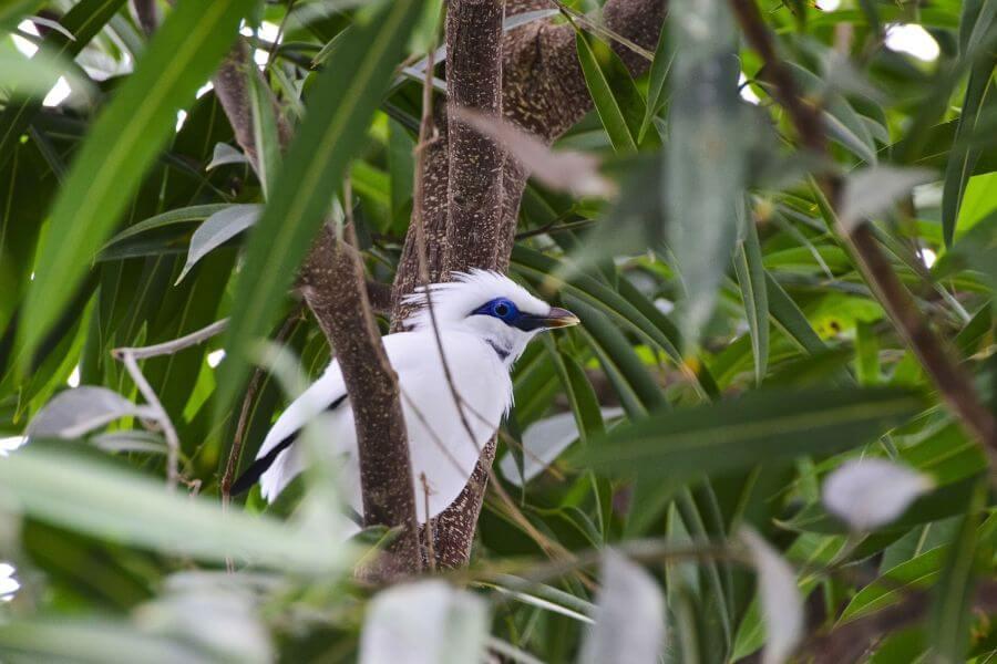 fi Indonesie Trekking in het Nationale Park van Bali vogel