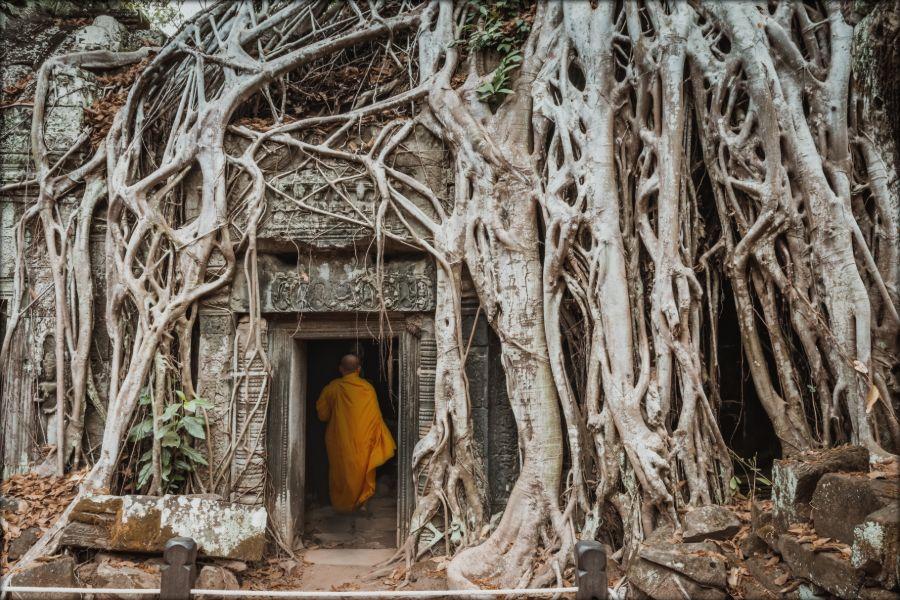 Cambodja Siem Reap Ta Prohm Angkor Wat monnik gigantische boom en rots landmark