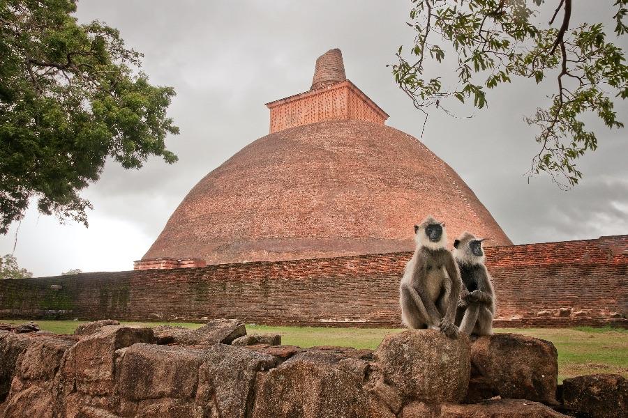 Dag 3: Negombo – Anuradhapura