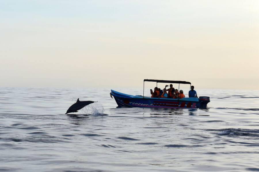 Sri Lanka Trincomalee dolfijnen en walvissen spotten