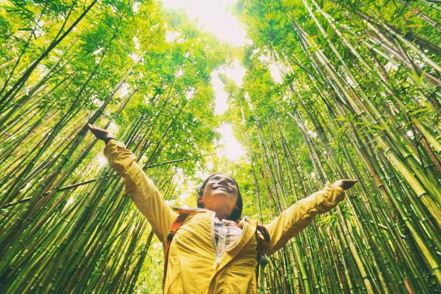 Sustainable eco friendly travel tourist hiker walking in natural bamboo forest enjoying healthy environment renewable resources