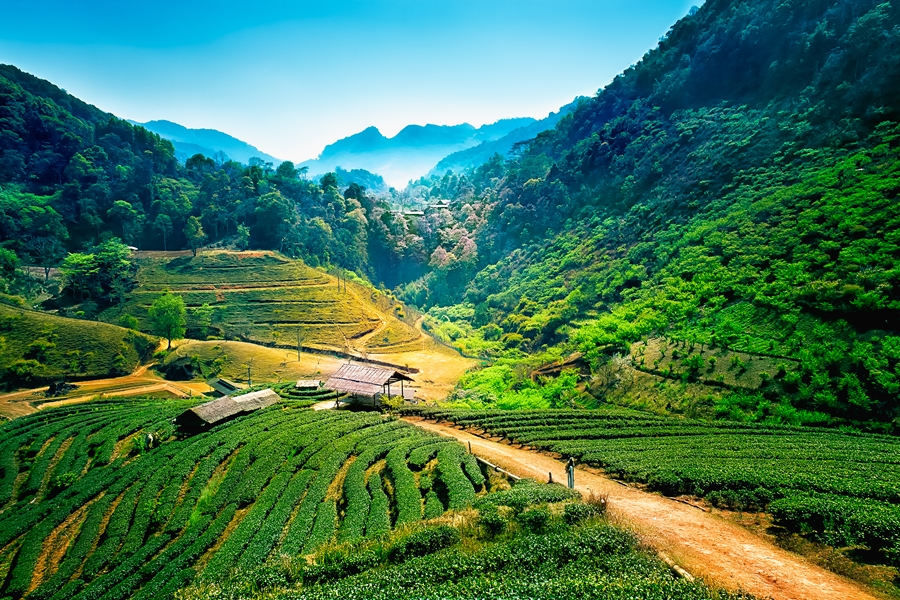 Gerelateerde tour 5-Daagse bouwsteen Noord-Thailand