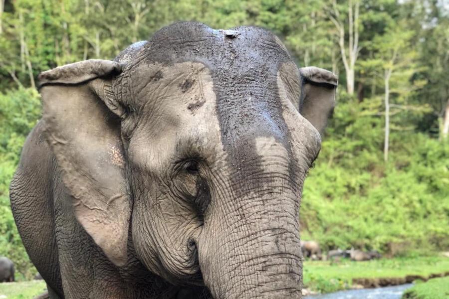Dag 14: Junglekamp – Chiang Mai