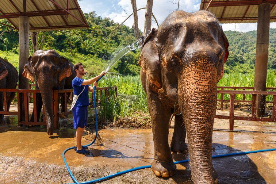 Thailand Chiang Mai Olifant wassen