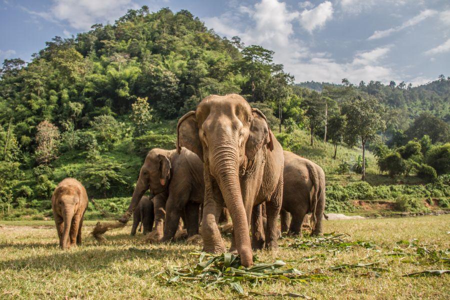 Thailand Chiang Mai Olifant
