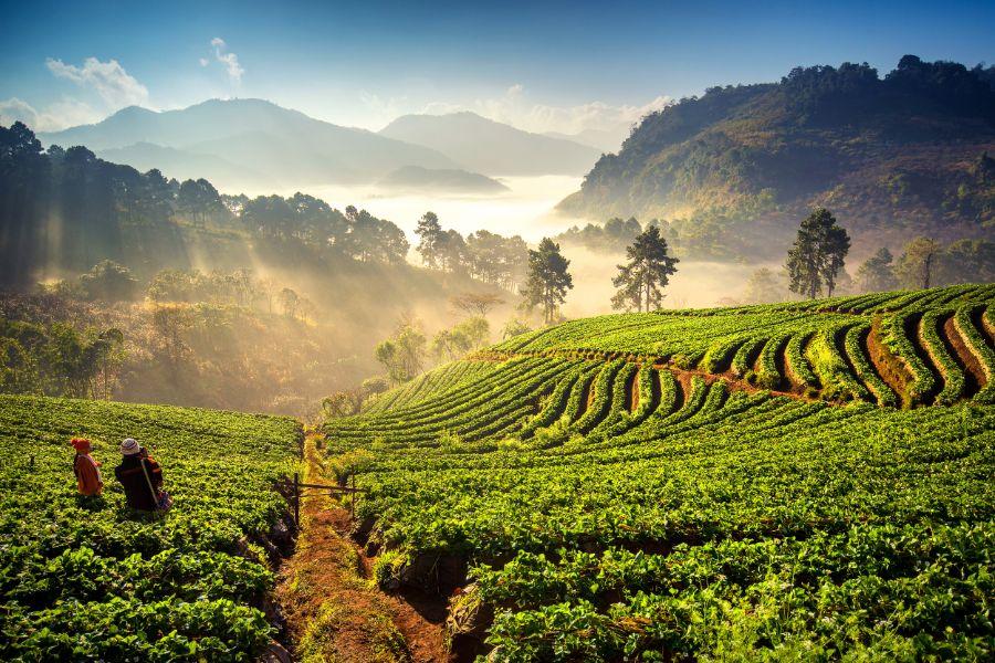 Thailand Chiang Mai Rijstvelden