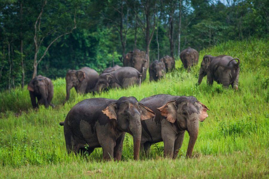 Thailand Khao Yai Nationaal Park