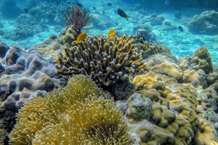 Thailand Koh Tao Onderwater Koraal Rif