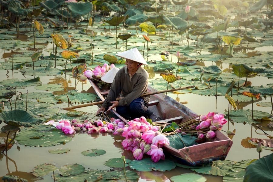 Thailand Laos Vietnam landbouw oogst lotus bloem moeras