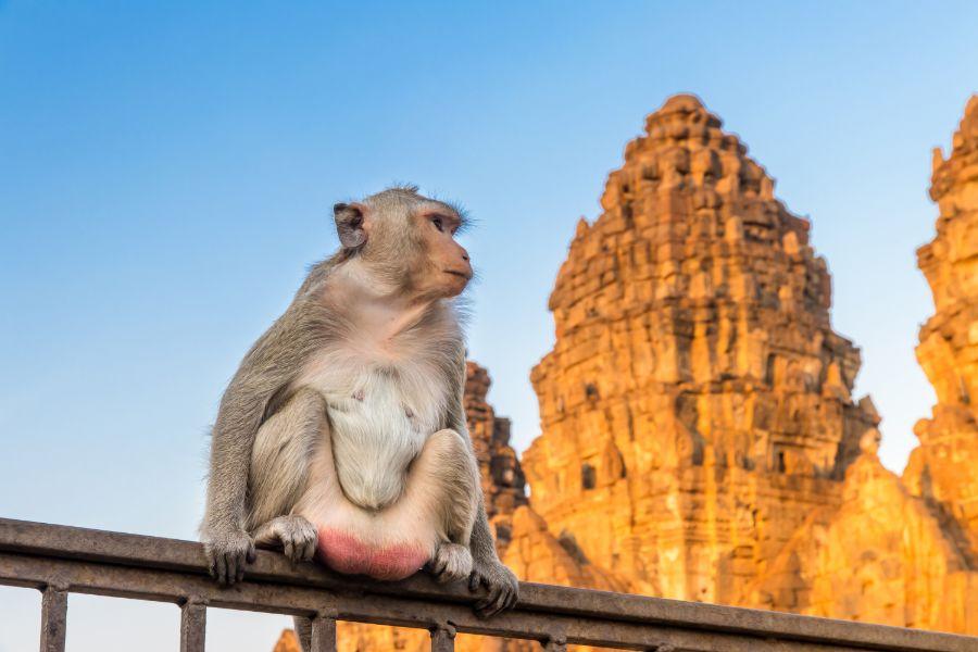 Dag 8: Ayutthaya – Uthai Thani