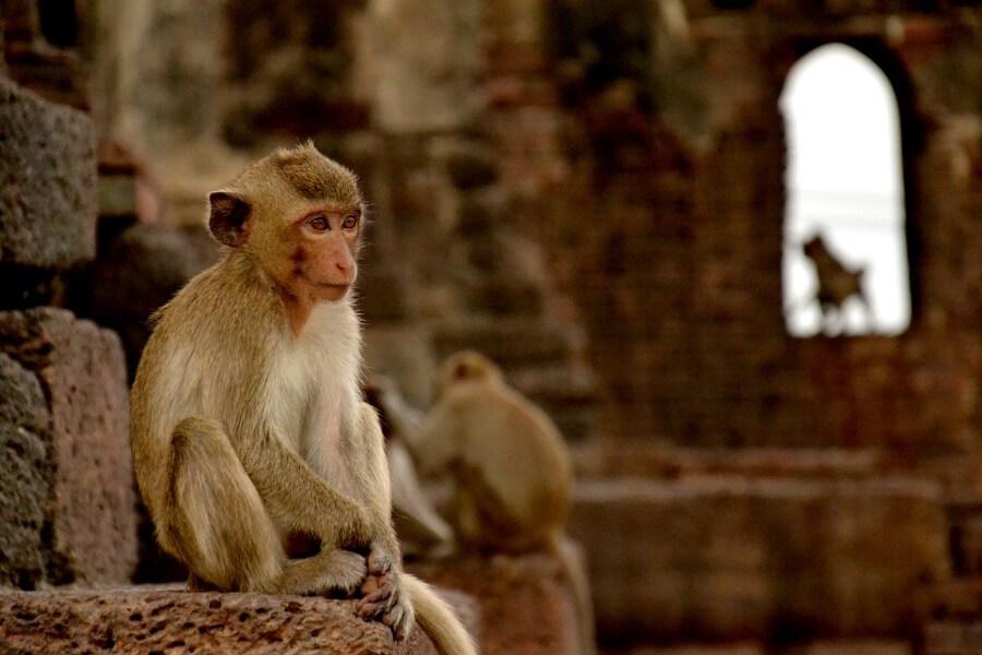Dag 7: Ayutthaya – Sukhothai