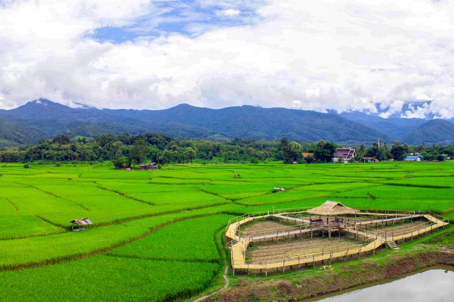 Thailand Nan Province Pua District Green rice fields in the morning during rainy season 1