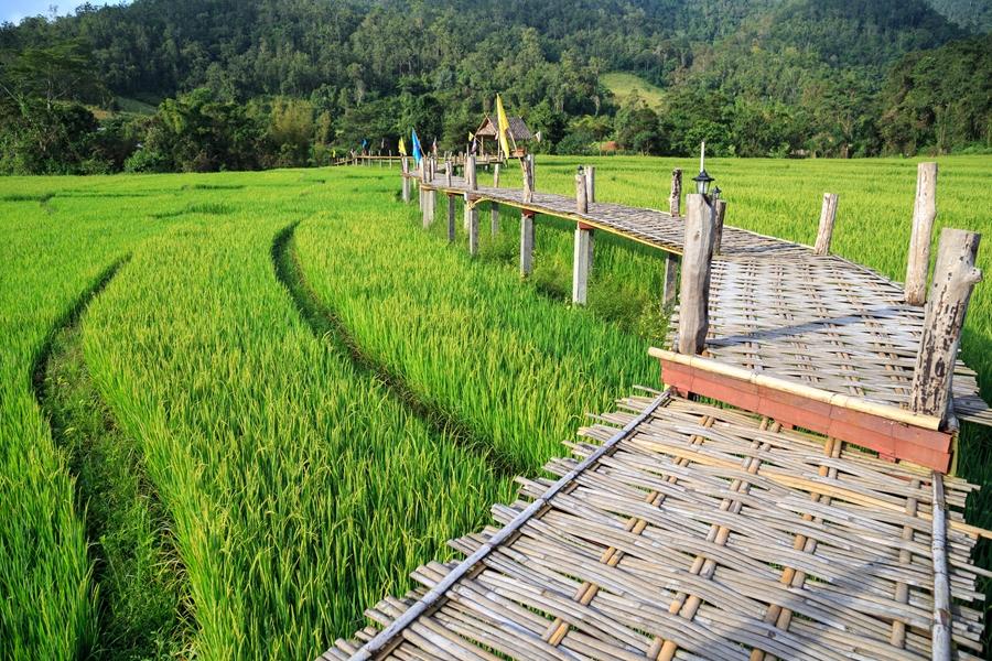 Thailand Pai Bamboe brug over de rijstvelden