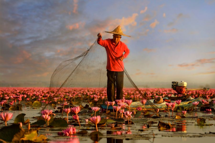 Thailand Red Lotus lake Udon Thani fisherman landbouw oogst lotus bloem