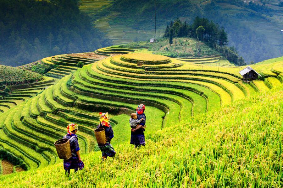 Vietnam Mu Cang Chai Yen Bai rijstvelden oogst platteland bevolking bergstam