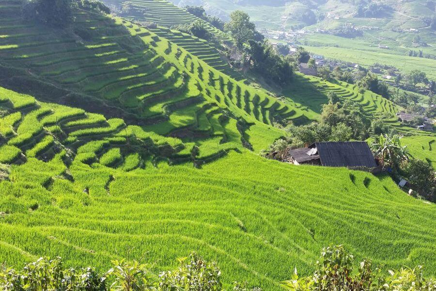Vietnam Sapa rijstvelden landschap natuur