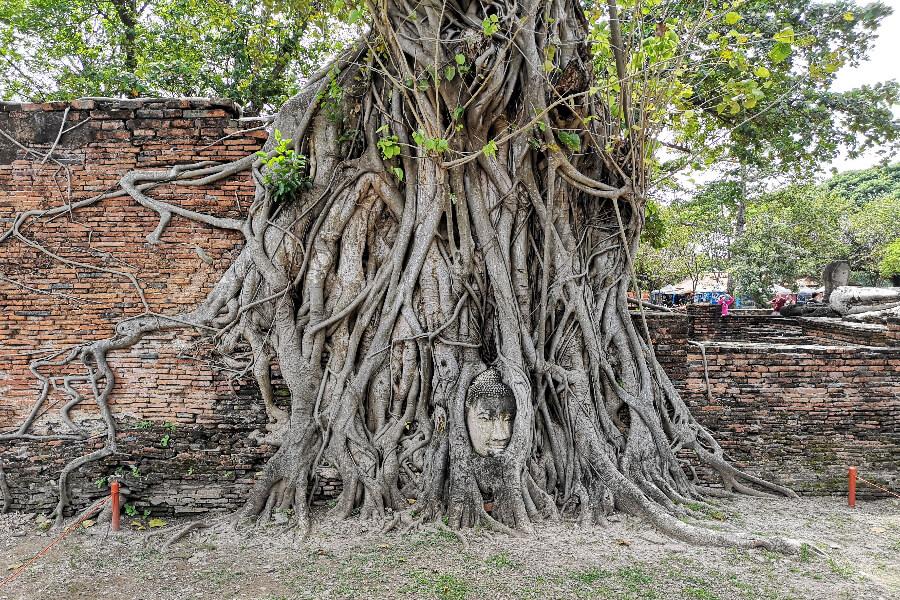 Ayutthaya Eco boerderij Garnalen Vissen2