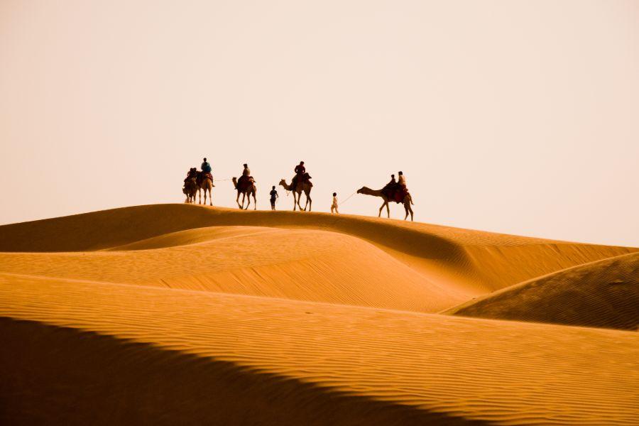 India Bikaner Kamelen