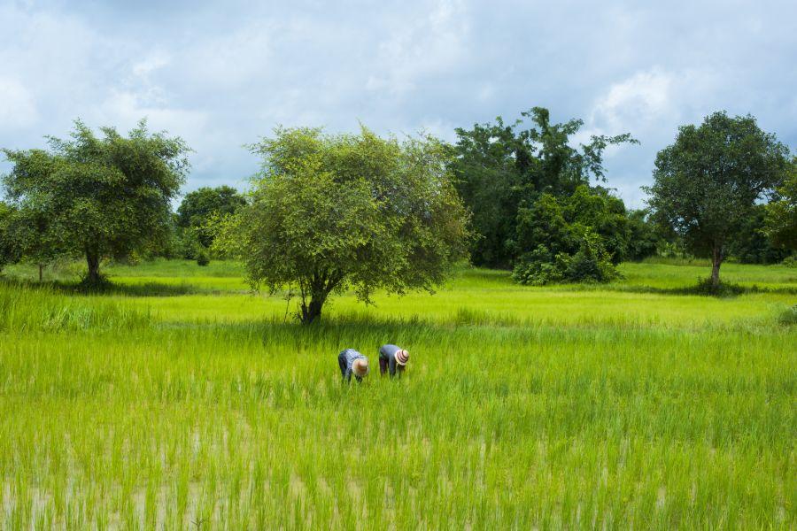 Cambodja Battambang Natuur