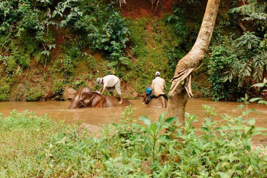 Cambodja Mondulkiri Sen Monorom elephant valley project olifant wassen en verzorgen