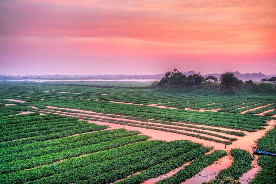 Cambodja Phnom Penh plattelandse leven rijstvelden landschap natuur omgeving 1