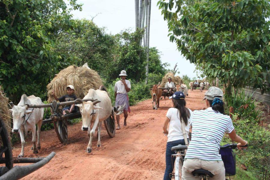 Cambodja Platteland Ossekar Lokaal Leven Onverharde weg fietstour