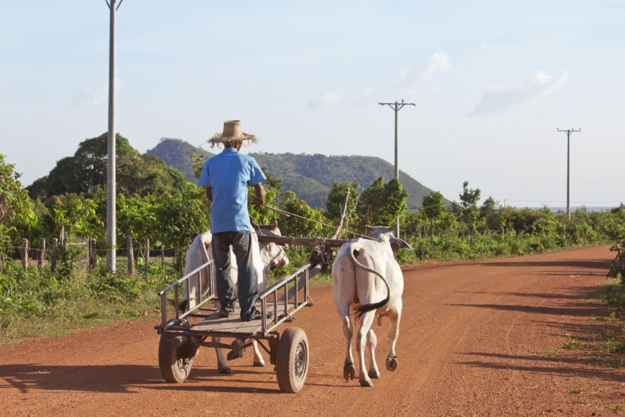 Cambodja Platteland lokaal leven farmer boer koeien kar