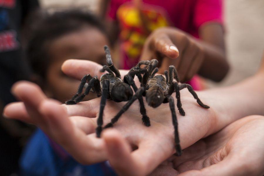 Cambodja Spinnen Markt Skuon 1
