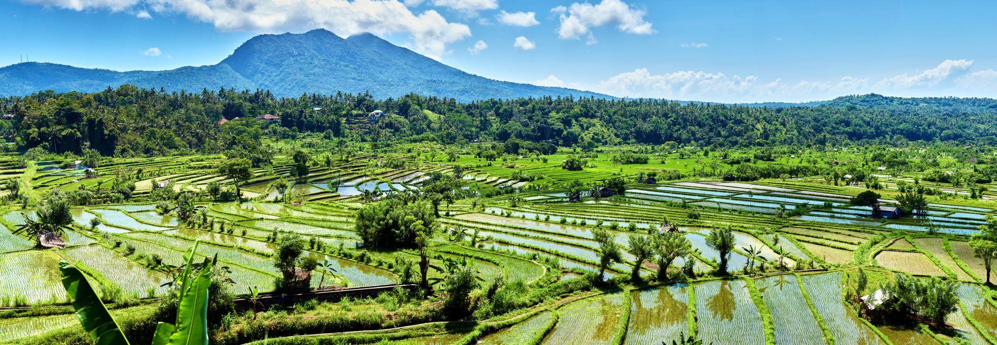 Indonesie Bali Candidasa rijstterrassen