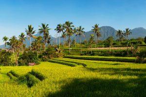 Blog artikel1 'Wandelen tussen de Balinese rijstvelden'