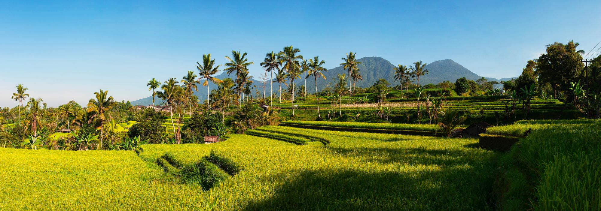 Indonesie Bali Ubud rijstvelden