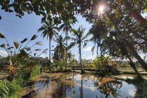 16-Daagse rondreis Oost-Java en Bali