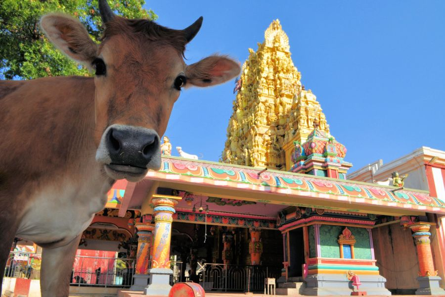 Dag 5: Anuradhapura – Jaffna