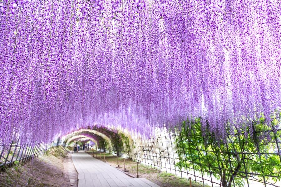 Japan Fukuoka Paarse bloemen in herfst