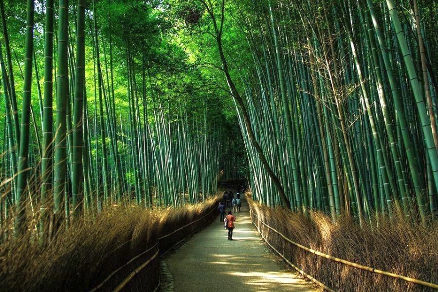 Japan Kyoto 14