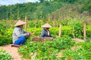 Bezoek aan de Living Land Farm in Luang Prabang
