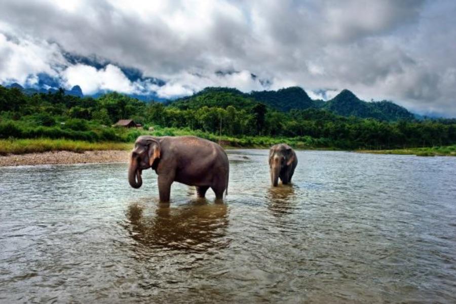 Laos Luang Prabang Mandalao elephant conservation